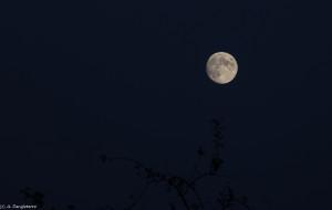 01- lever de Lune