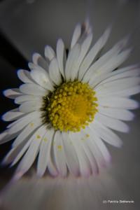06-Macro