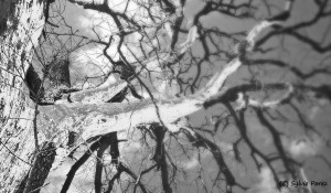 24-mon arbre 1