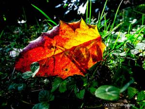 01- lueurs d'automne cip aut 14
