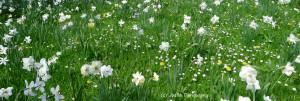27- vivement le printemps !cip 15