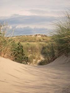 39 -dunes de Stella Plage