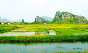 47 baie d'Halong rizières