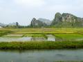 009 rizières Vietnam 10 S