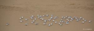 04- sur un lit de sable