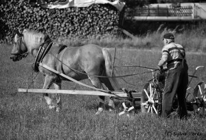 24- Le vieil homme et son cheval