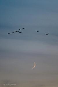 migration au loin