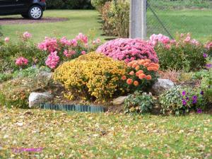 10- fleurs d'automne