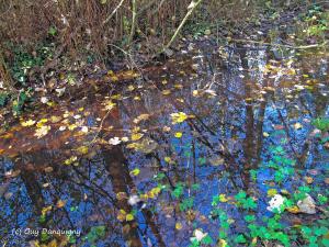 16- l'or de l'automne
