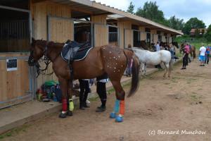 07- fête du cheval