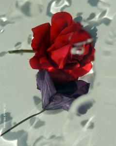09- Eau de Rose