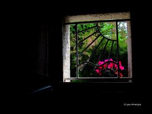 23- les fleurs, c'est la vie, la liberté... cip 15
