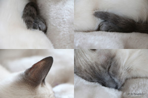 01- mon chaton