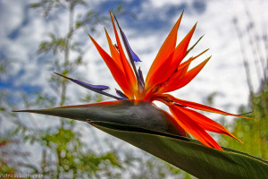 43- Une fleur ou un oiseau