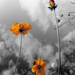 39-Fleurs